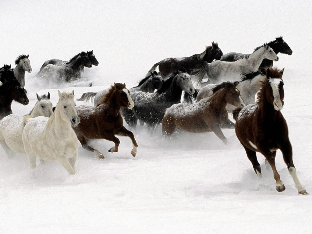 HORSES IN THE SNOW